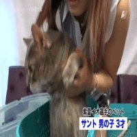 autoplay_gif cat incorrect_aspect_ratio io_shirai stardom // 200x200 // 2.5MB