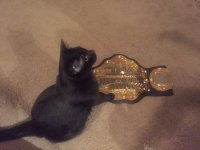 TNA_World_Heavyweight_Championship cat // 600x450 // 40.9KB